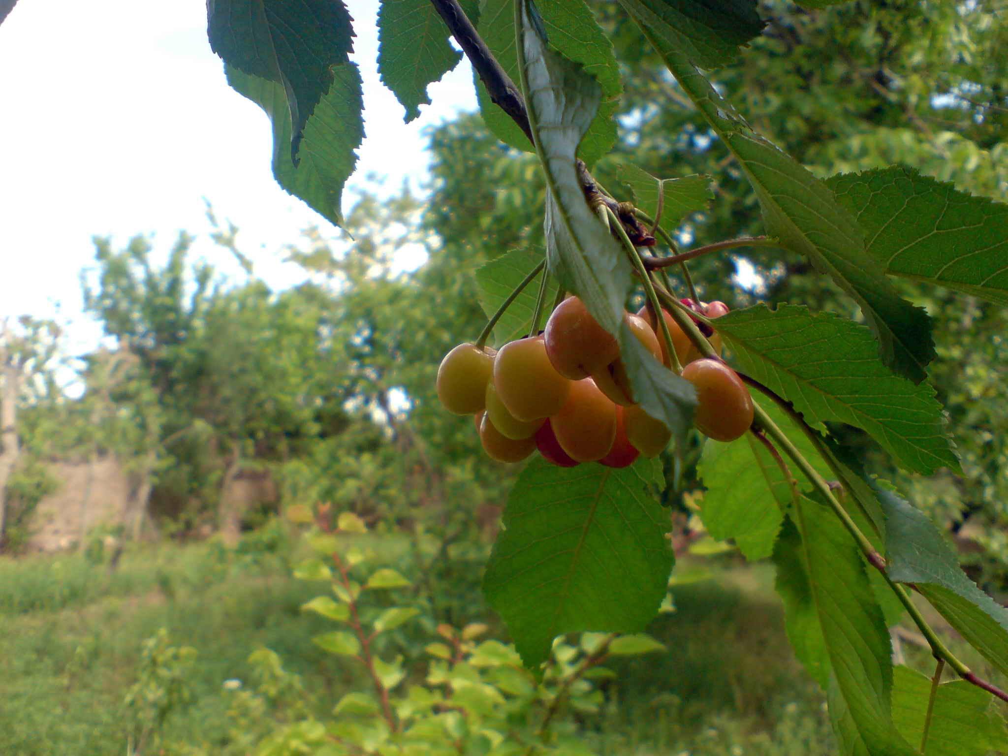 طبیعت روستای روچی